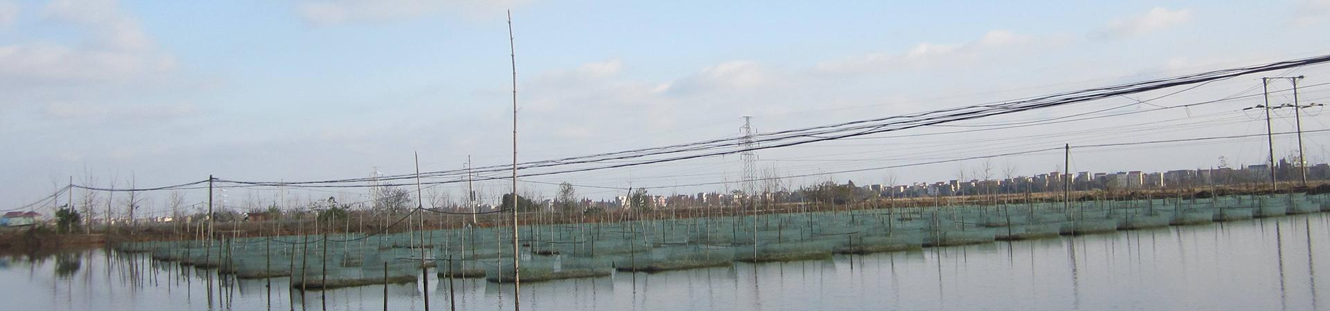 黄鳝养殖户要掌握这些驯食技术要点