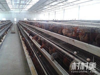 鸡场拆迁,转让网片,塑钢线,料筒,热风炉,风机等