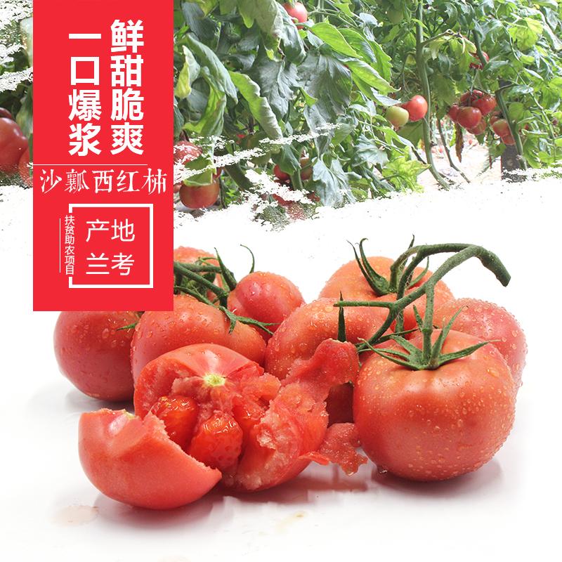 兰考特产现摘沙瓤西红柿5斤装 农家自种新鲜水果时令蔬菜番茄