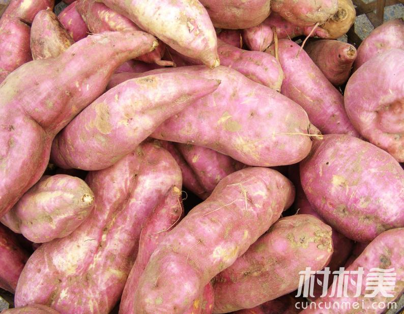 特价甜红薯
