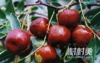 五谷加红枣,胜似灵芝草;每日食三枣,百岁不显老