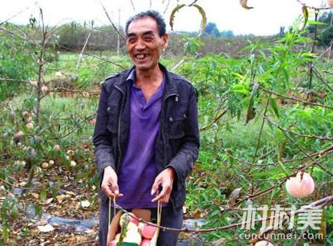 60岁老农创业种冬桃,成致富带头人!