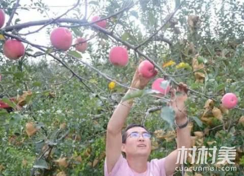 宜川小伙漂泊10年返乡创业,3天销售苹果50000元!