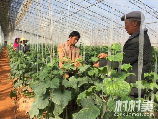 刘毅,优化土地产业结构,带领乡亲们脱贫致富