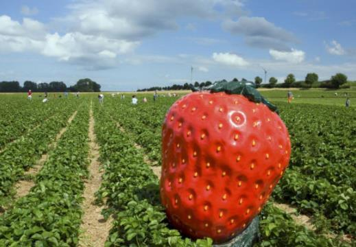 男子种草莓发了家,打造种植生态园,一个大棚收入达15万