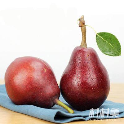 陕州区红啤梨