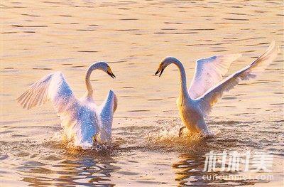 天鹅湖城市湿地公园